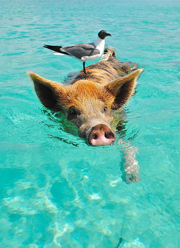 Багамы cruise main
