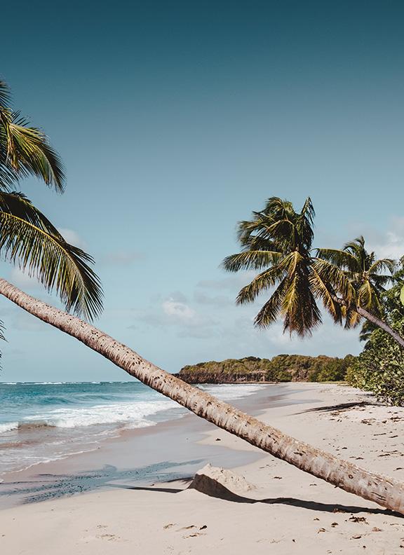 Мартиника cruise main